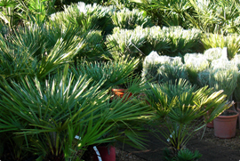 gallerie-arbres-plantes